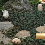 Japanese Chocolate Garden